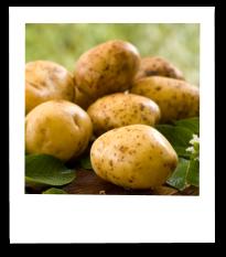 Erzeugnisse-Kartoffeln